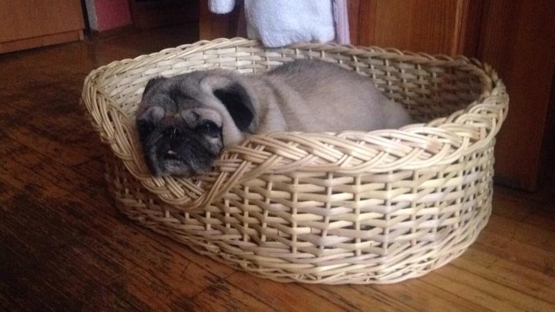 Лежак плетёный из натуральной лозы для собак и кошек - Фото 2