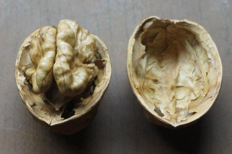 Саженцы крупноплодного грецкого ореха - Фото 2
