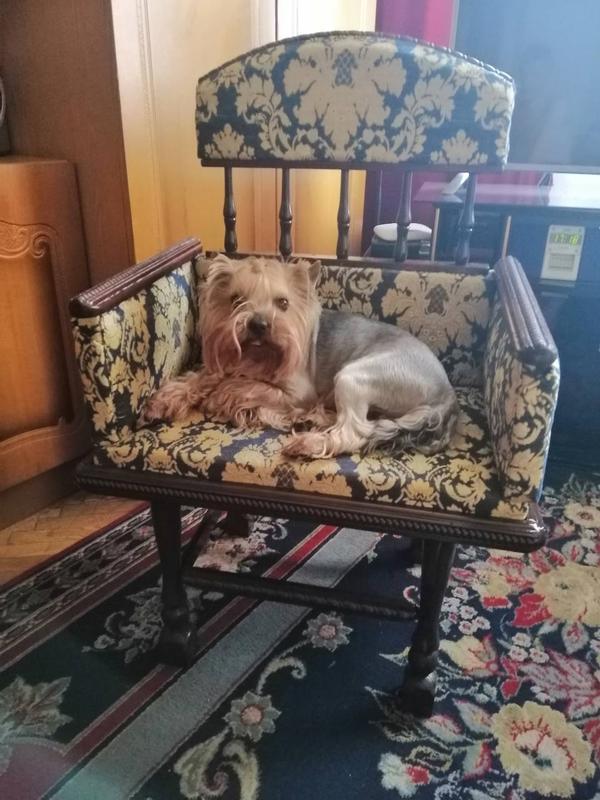Лежанки-Диванчики для собак. - Фото 3