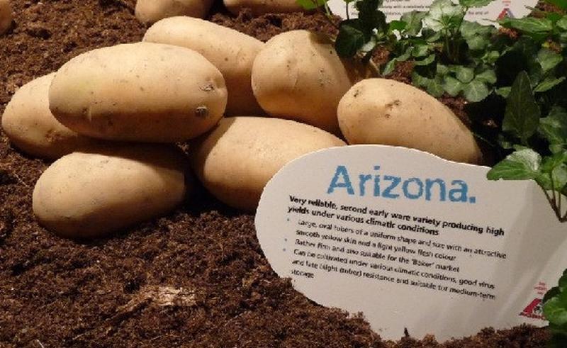 Элитный картофель семенной (посадочный). В наличии 20 сортов - Фото 2