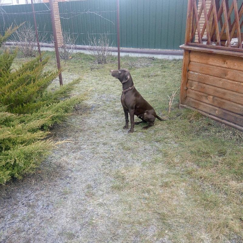 Передержка собак в частном доме - Фото 4