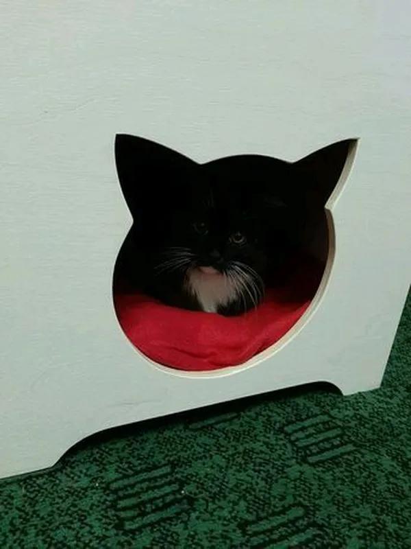 Домик для кота - Фото 4