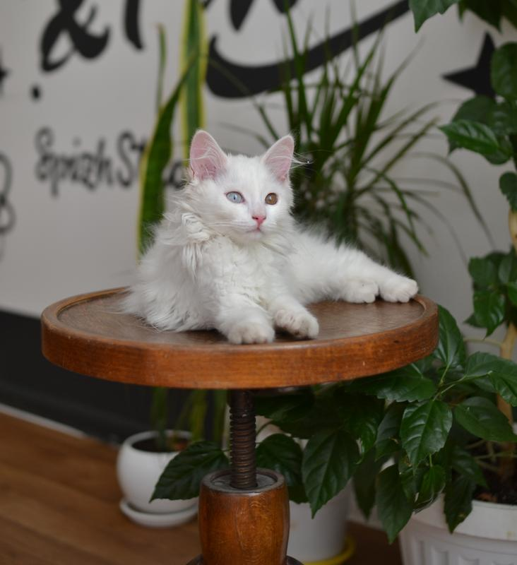 Передержка кота или собаки - Фото 4